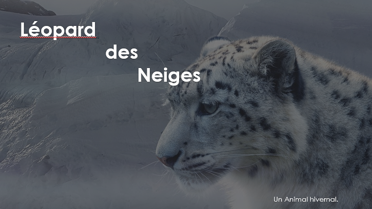 Journal de la semaine! Rubrique Sciences : Le léopard des neiges, 1er épisode! Par Émily et Aurély.